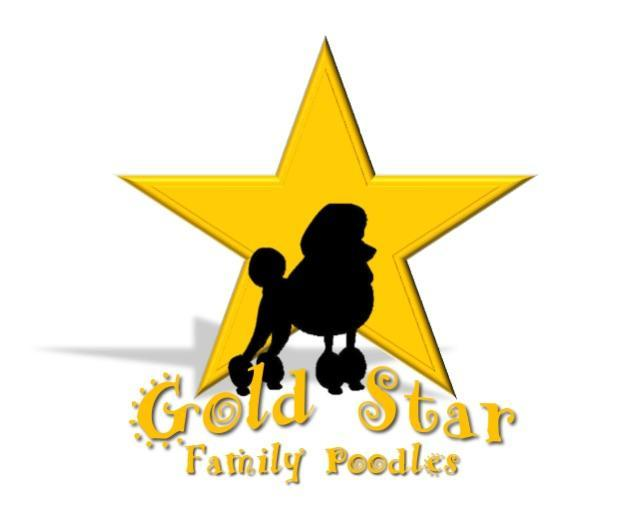 Gold Star Family Poodles