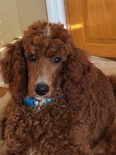 dog sitting on linoleum