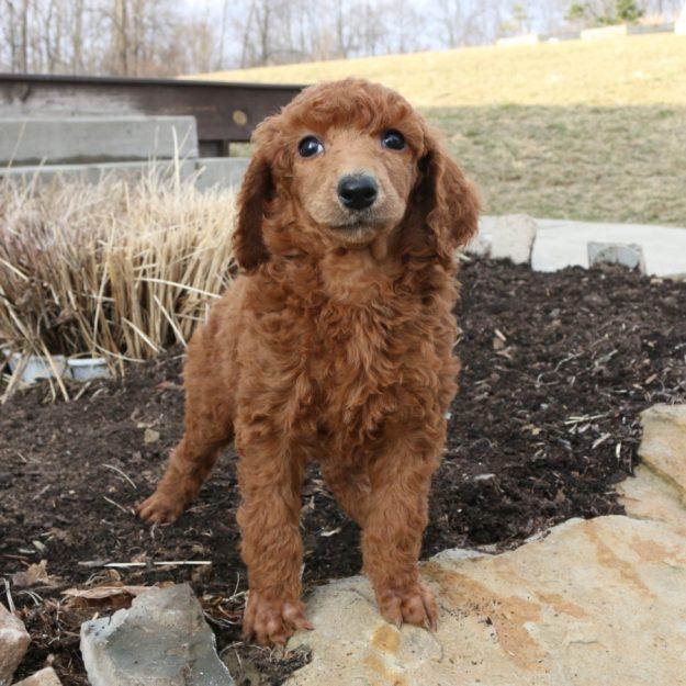 a dog in a garden with a dead bush