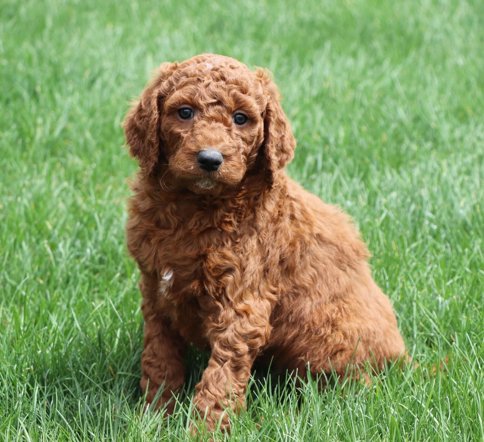 adorable dog
