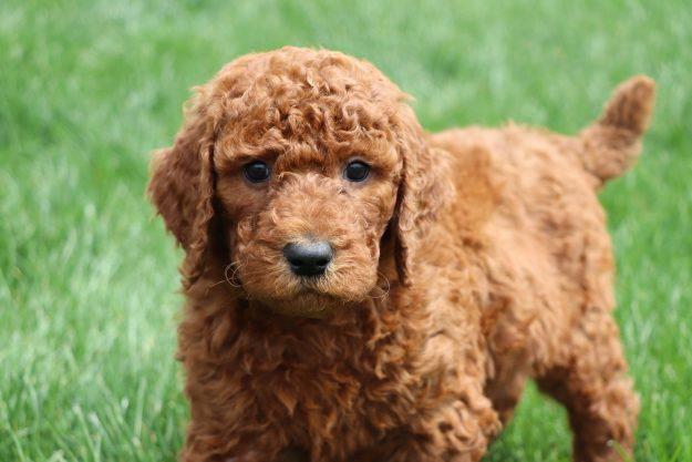 a depressed puppy