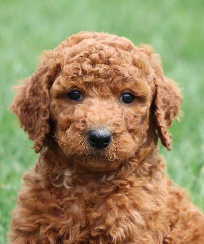 close up puppy