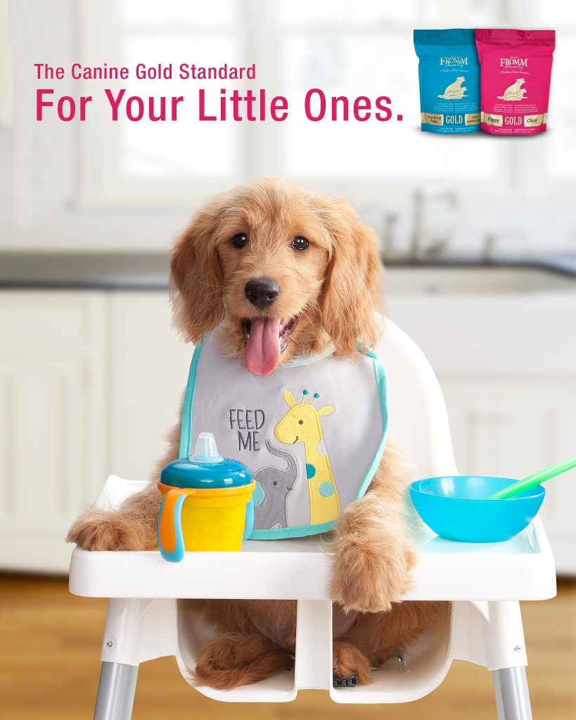 puppy in high chair with bib fromm gold