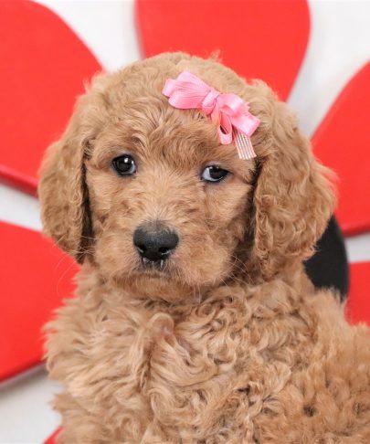 Daisy4